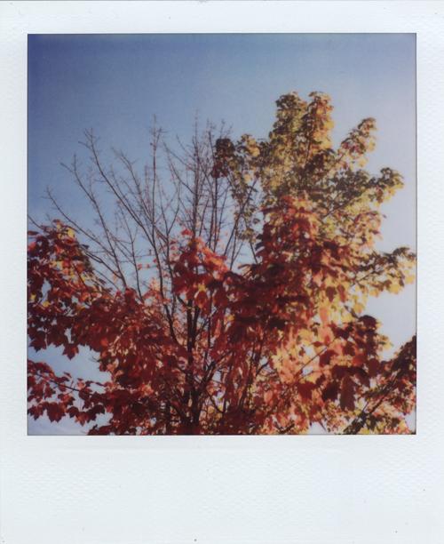 09.10.01 fall tree
